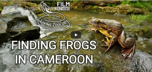 LivingZoology_Finding_Frogs_in_Cameroon