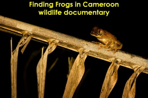 06b_Finding_Frogs_Cameroon_DSC_2799re
